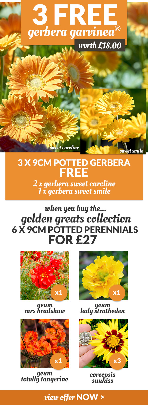 3 Free Gerbera When You Buy The Golden Greats Collection